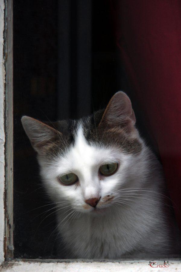 BRETAGNA - Gatto curioso