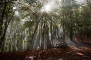 COSENZA - Nebbia