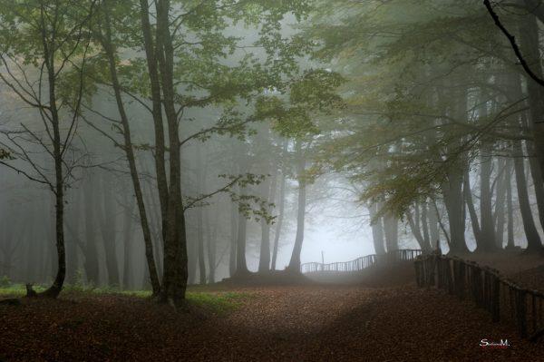 COSENZA - Nebbia a Laghicello