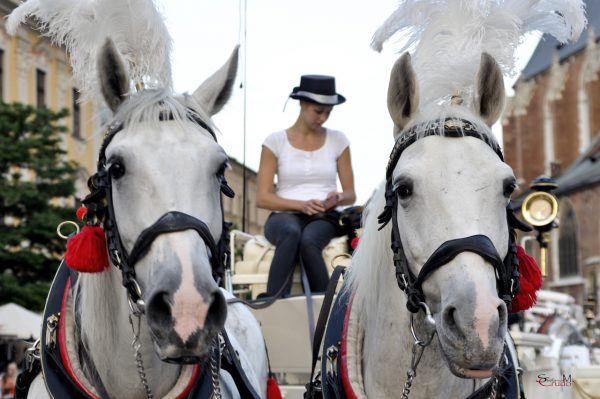 CRACOVIA - Due cavalli bianchi